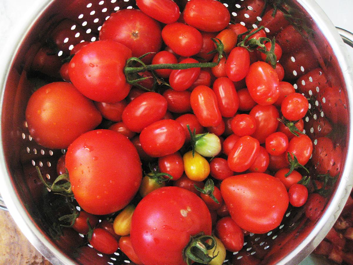Tuscany_tomatoes